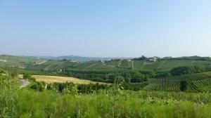 A travers les vignobles
