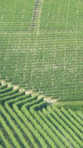 Vignobles d'Asti...ils font aussi du Chardonnay