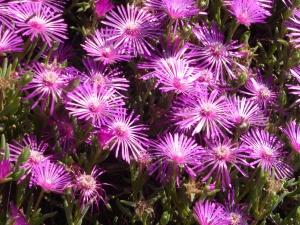 parterre de fleurs sur le parcours